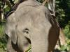 Im Elefantencamp in der Nähe von Luang Prabang