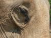 Im Elefantencamp in der Nähe von Luang Prabang - auf Tuchfühlung mit den Dickhäutern