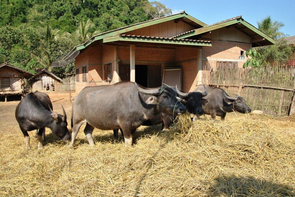 Der Agrarsektor ist enorm wichtig für Laos