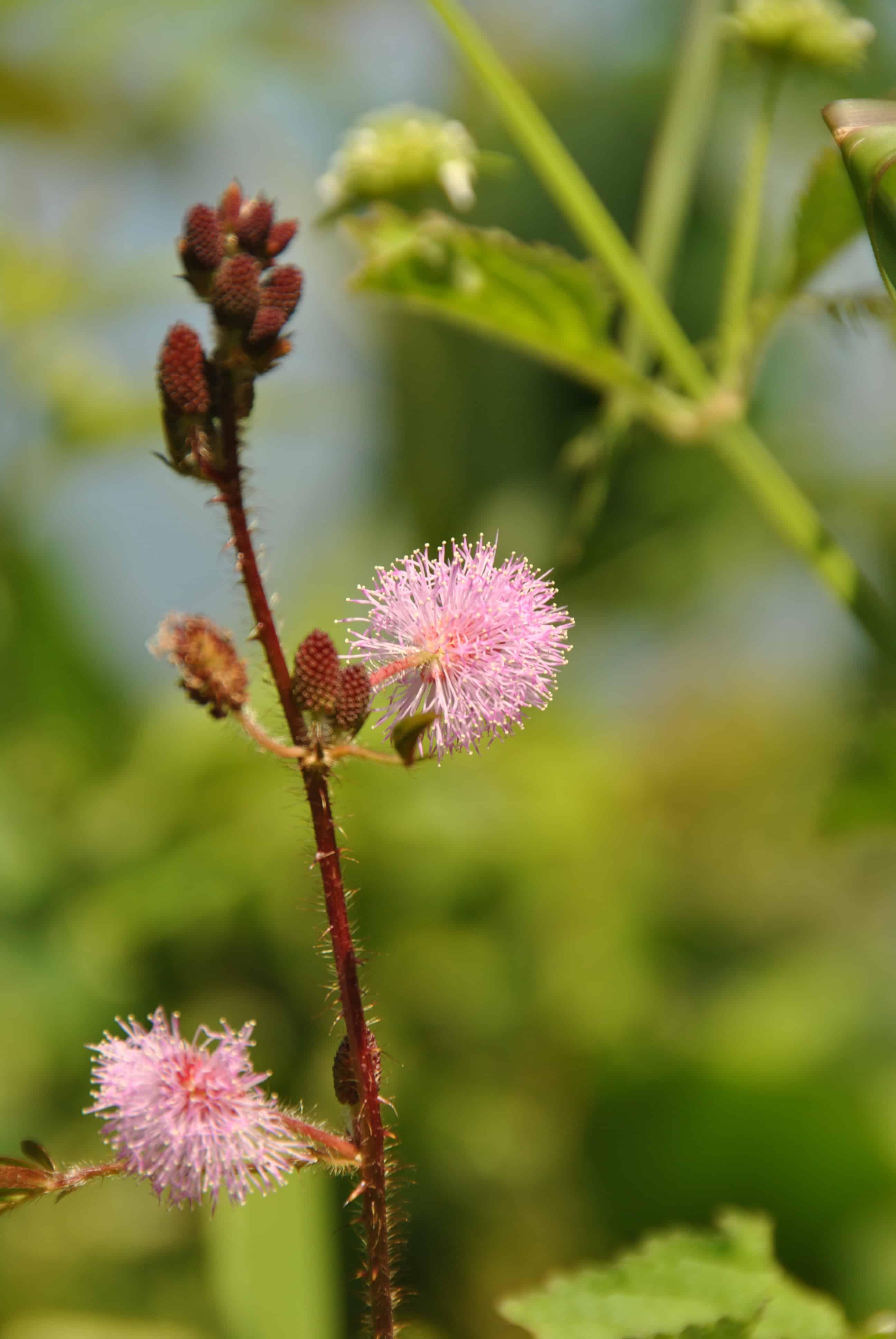 Flora von Laos