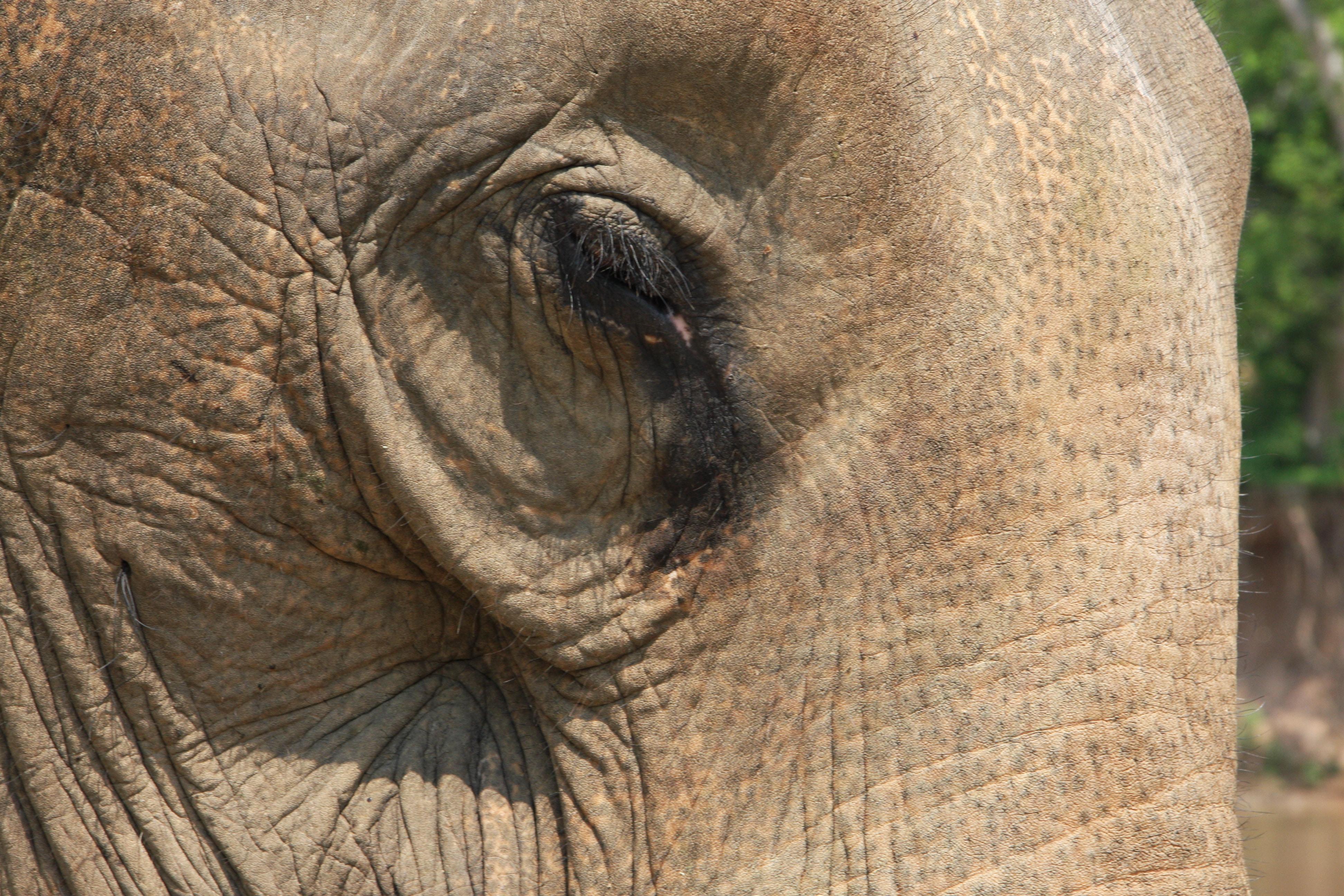 Fauna von Laos